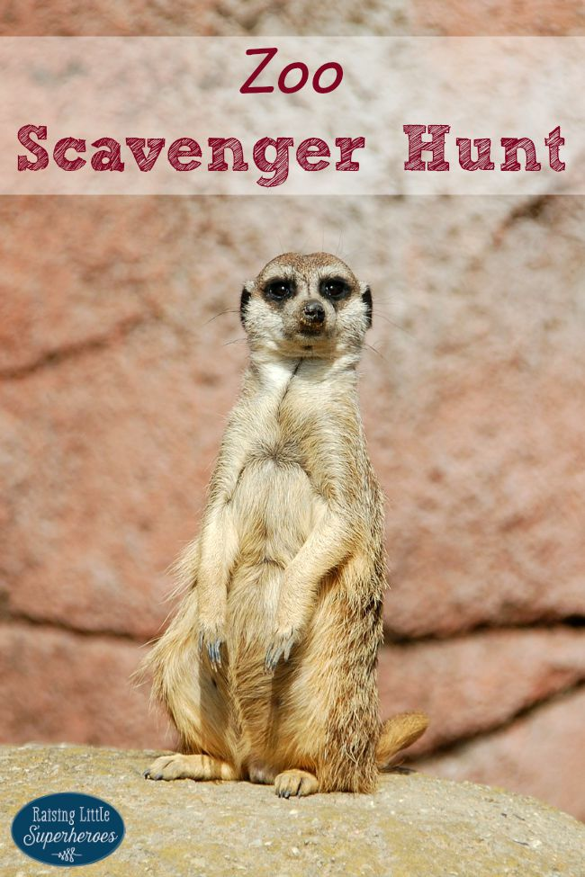 Zoo Scavenger Hunt, Outdoor Activities for Kids, Activities for Kids, Scavenger Hunt