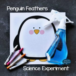 How do penguins stay dry penguin feathers science experiment